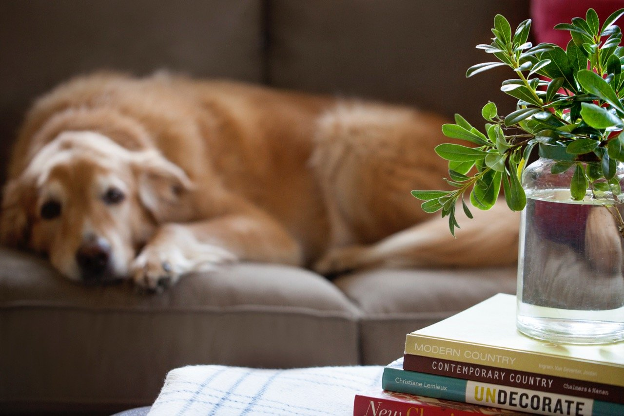 Home Design Accents: dog on couch